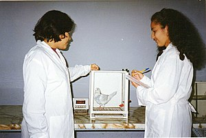 Operant conditioning chamber - Students using the Skinner box, at National University of San Marcos in Lima, Perú.