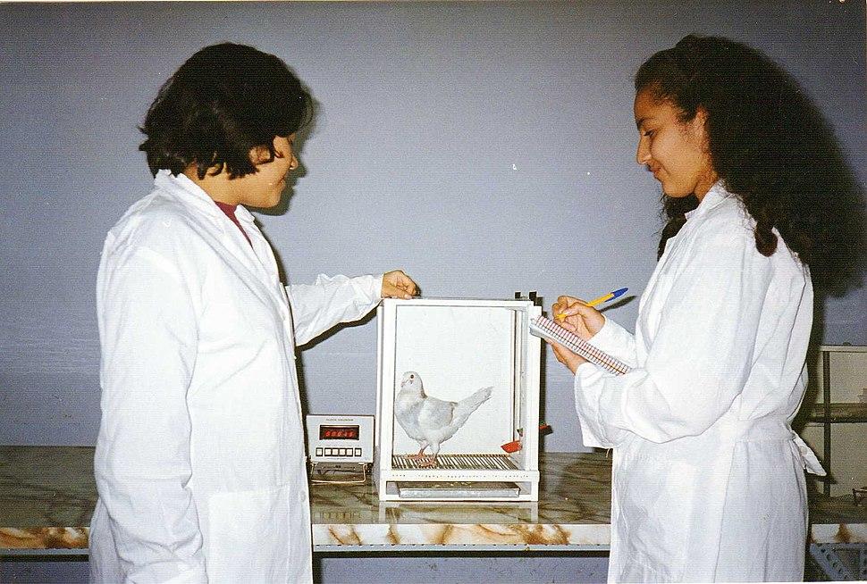 UNMSM PsiExperimental 1998 2