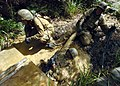 US Navy 070927-N-4267W-162 Seabees with Naval Mobile Construction Battalion (NMCB) 7 work together to exit a mud-filled trench during a jungle warfare training evolution hosted by Marines with the Jungle Warfare Training Comman.jpg