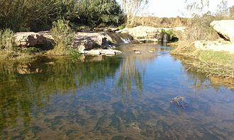 Carraixet - Image: Ullal del Pont Sec al Barranc del Carraixet 11