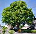 UlmeBeltheim HDR.jpg