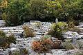 Un des deux dolmens du ruisseau de Fontgraze.JPG