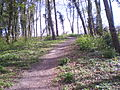 Up there we will arrive when climbing up this Stuyvesant Hill-ins blauen hinein.JPG
