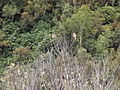 Valley of flowers National Park 41.JPG