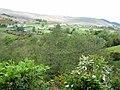 Valley of the Kilbroney - geograph.org.uk - 441816.jpg