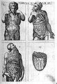 "Valverde de Hamusco ""Anatomie"", viscera Wellcome L0002520.jpg"