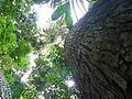 Vegetación de la Reserva de la Biosfera La Amistad Panama (RBLAP) 09.JPG