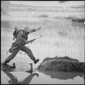 Vietnam....A Marine rifleman with Company H, 2nd Battalion, 5th Marines, Leaps across a break in a rice paddy dike... - NARA - 532474.tif