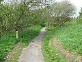 View along the Stour Valley Walk - geograph.org.uk - 1270227.jpg