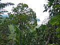 View from Lintang Trail (15579533519).jpg