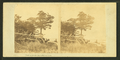 View of a rustic wooden fence, Fairhaven, by Bierstadt Brothers.png