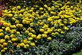Villa Taranto - Blumenbeet 1.jpg