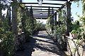 Villa di bivigliano, pergolato 04.jpg
