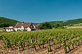 Vineyards near Gevrey-Chambertin (7309853672).jpg