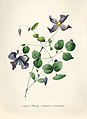 Vintage Flower illustration by Pierre-Joseph Redouté, digitally enhanced by rawpixel 75.jpg