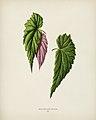 Vintage illustrations by Benjamin Fawcett for Shirley Hibberd digitally enhanced by rawpixel 76.jpg