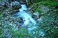 Vintgar Gorge (35811862975).jpg