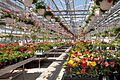 Volante Farms greenhouse.jpg