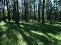Vormsi kalmistu, Hullo küla.JPG