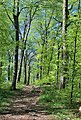 Waldweg am Albtrauf bei Beuren (2).jpg