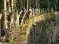Wall, Galloway House - geograph.org.uk - 736462.jpg