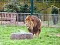 Wallace at Blackpool Zoo (geograph 2960464).jpg