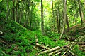 West Branch Research and Demonstration Forest (23) (28015842781).jpg