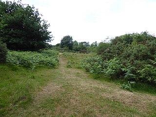 Weston Fen Suffolk Wildlife Trust nature reserve