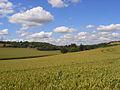 Wheat, Radnage - geograph.org.uk - 892147.jpg