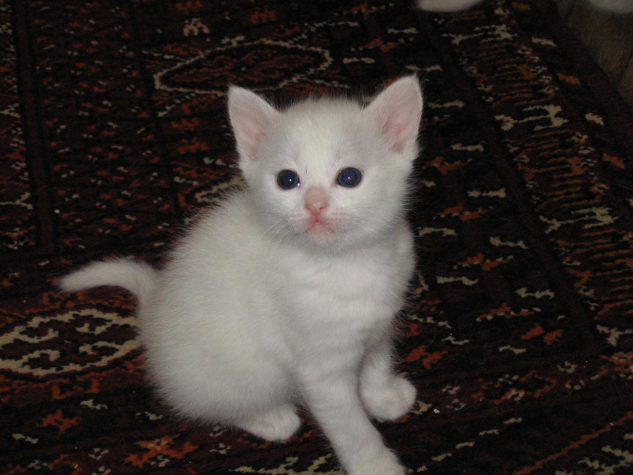 Gray Cat Rescue Walkthroigh