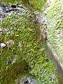 WikiProjekt Landstreicher Wasserfall Hinang 45.jpg