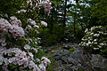 Wildflowers-rocks-spring-mountain-trail - West Virginia - ForestWander.jpg