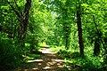 Wilsonville Memorial Park trail.JPG