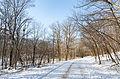 Winter at Lake Maria State Park, Minnesota (23978991560).jpg