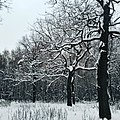 Wle kuskovo oaks.jpg