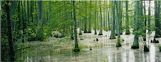 Mississippi - Bottomland hardwood swamp near Ashland, Mississippi