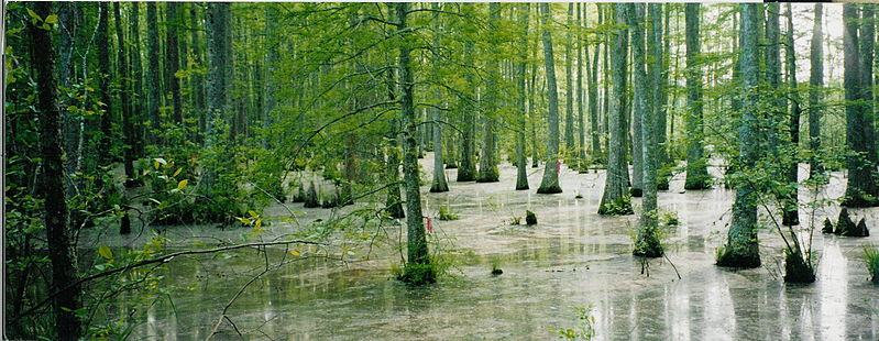File:Wolf-River-swamp-North-Mississippi.jpg