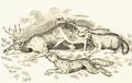Wolves killing caribou.png