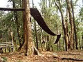 Wooden foot bridge of Heritage forest of Loleygaon, Darjeeling, West Bengal.jpg