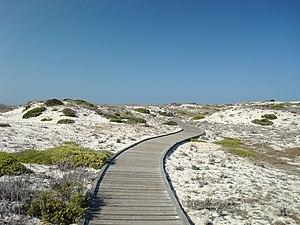 Asilomar State Beach - Wooden boardwalk through natural dune habitat