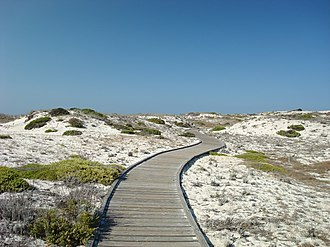Asilomar State Beach - Wooden boardwalk through natural dune habitat