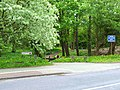 Woodland Walk, Plumer Road - geograph.org.uk - 171883.jpg