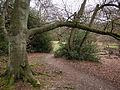 Woodland scene (6958311234).jpg