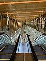 Woodlands MRT Station North-South Line & Thomson-East Coast Line Transfer Linkway.jpg