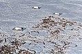 Yakutia - DSC 5471.jpg