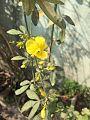 Yellow Lily.jpg