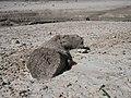 Yesa - Embalse - Sequía 02.jpg