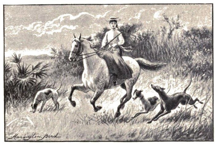 Teenage girl on horseback, accompanied by three dogs.