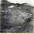 Zoltan Kluger. Swamps (near Lake Huleh).jpg