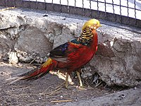 Zoo in Yalta 013.jpg